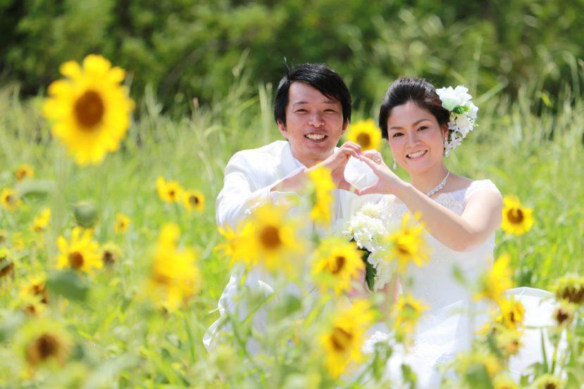 石垣島のひまわり畑